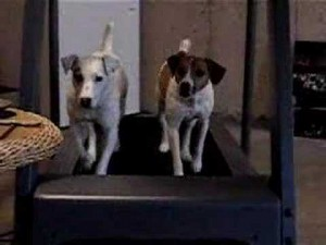 Dogs on a Treadmill